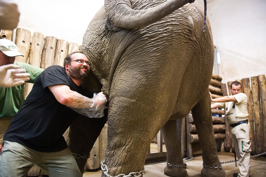 elefánt, állatkert, egészségügy, műtét, hét képei