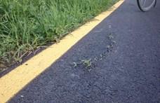 Kinőtt a fű a januárban átadott bicikliútból