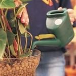 Sárgulnak, kiszáradnak a növényei? Segít az agyaggranulátum!