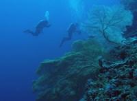 30-45 méteres mélységben váratlan csodákat rejt a Nagy-korallzátony