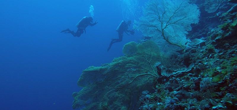 A kutatók is megdöbbentek, mennyi új fajt találtak Tasmania vizeiben