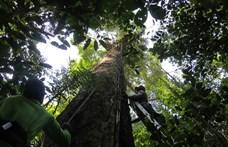 Rengeteg új barlangrajzot fedeztek fel Amazóniában, 12 ezer évesnél régebbi is van köztük