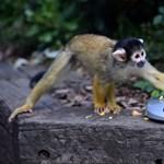 Fotók: lezajlott az éves állatkerti mérés Londonban