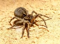Hatalmas pókok ijesztgetik a rábaközieket