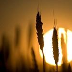 Ha tényleg beüt a klímaváltozás, újra kell gondolni a mezőgazdaságot