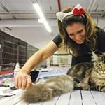 Minél értelmesebbnek tartja macskáját, annál többet fog kommunikálni önnel