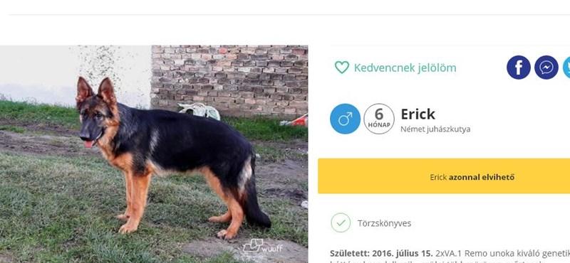 Megérkezett a kutyák Facebookja