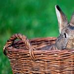 5 dolog, amit eddig nem tudtál a húsvétról