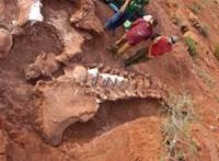 Gigantikus dinó csontvázát találták meg Argentínában