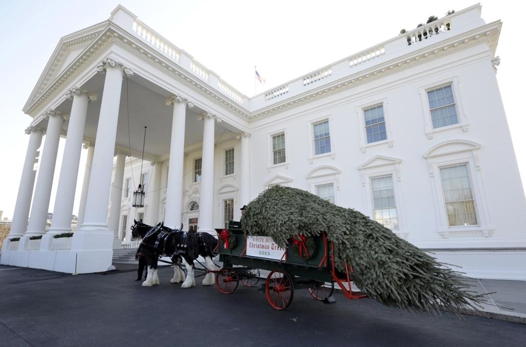 AP! dec.14-ig! - Megérkezett a Fehér Ház karácsonyfája Washingtonba - lovasszekéren jött a fenyő