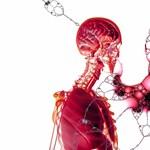 Jól ismeritek az emberi testet?