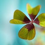 Mit tehetünk annak érdekében, hogy szerencsésebbek legyünk?