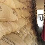 A ghánai kakaótermesztőknek csak álom az édes élet