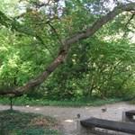 Ilyen a világ legidősebb fája