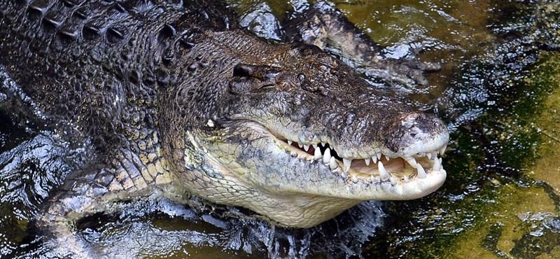 Megharapta Fidel Castro krokodilja, amputálták a karját