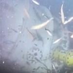 Élő videón nézheti, mi történik a Microsoft különleges, tenger mélyére tett adatközpontjánál