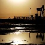 Majdnem harmadával zuhant a kőolaj ára