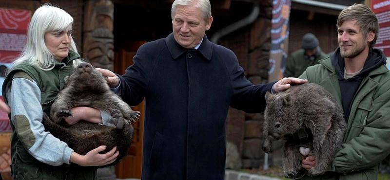 Galéria: két vombat érkezett az Állatkertbe