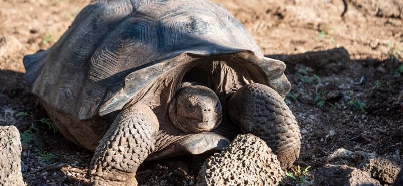 A teknősfajok több mint felét a kihalás fenyegeti