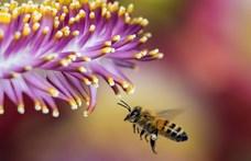 """""""Végzetes következménnyel járhat az emberek számára"""" – állítják a rovarok pusztulásáról"""