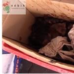 Zöld legyek a húsboltban – itt az újabb élelmiszer-biztonsági horrorvideó a Nébihtől