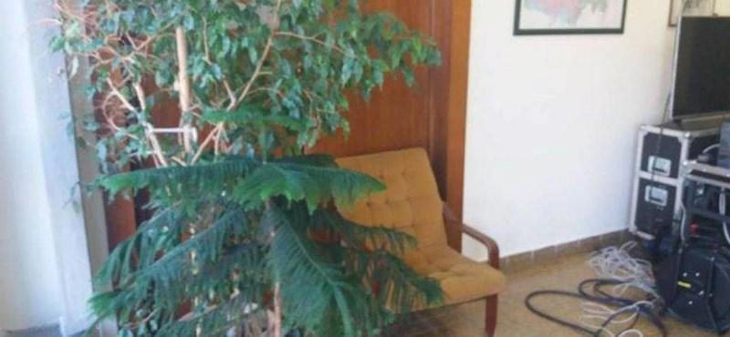 Átvette a hatalmat az ellenzék Szombathelyen, a fideszesek szobanövényekkel barikádozták el az üléstermet