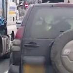 Nem hitt a szemének az autós: 3 tehenet vittek a Toyota hátsó ülésén – videó