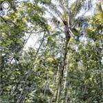 Nem az őserdők pusztulása, hanem országa hírneve miatt hőzöng a brazil elnök
