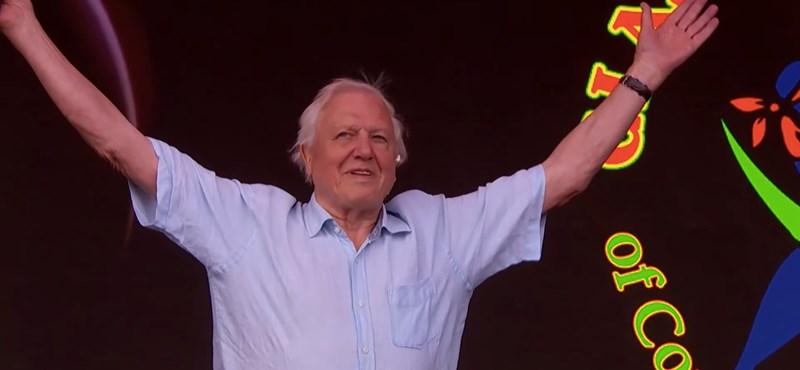 Videó: Óriási üdvrivalgás fogadta David Attenborought a Glastonbury fesztiválon