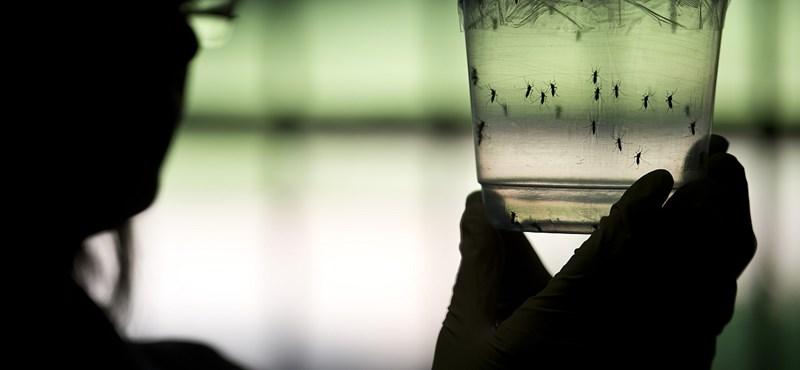 Zikavírus: jobb várni a véradással, ha valaki kockázatos helyen járt