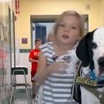 Napi szívmelengető: kutyájának köszönheti Bella, hogy járni tud