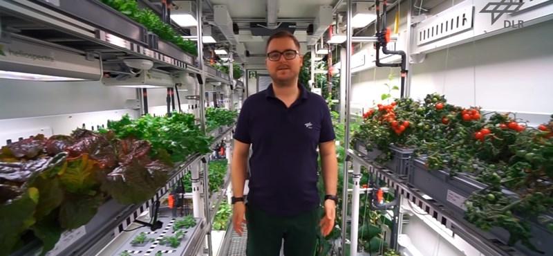 Közel 300 kiló zöldséget sikerült termeszteni az Antarktiszon