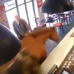 Ló ügetett be a bárba, volt is nagy ijedség – videó