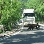 Látott már medvecsaládot így átkelni az országúton? – videó