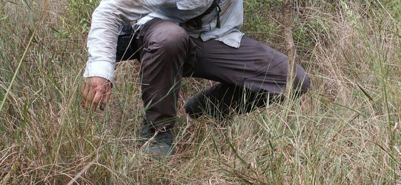Kínos beismerés a Discoveryn: Bear Grylls mégsem akkora túlélő
