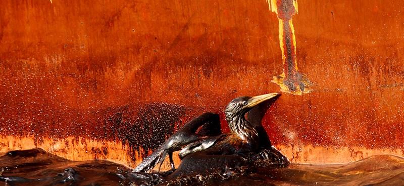 Két-háromszor annyi olaj ömlik a Mexikói-öbölben, mint hitték