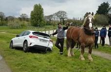 Egy ló húzta ki a bajból az elakadt új Ford Focust - videó