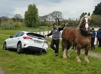 Egy ló húzta ki a bajból az elakadt új Ford Focust – videó