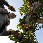 Átalakuló foglalkoztatás: kevesebb akisgazda, több arendőr