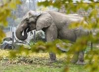 Állatkínzás miatt nyomoznak a szadai elefántok ügyében