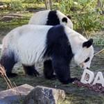 Mennyit fizetne egy képért, amelyet egy panda festett?