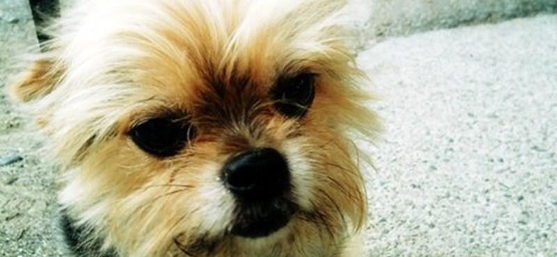 A nap kutyája: Turbo