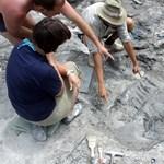 Felnőttként csőre volt a T-rex most megtalált kínai rokonának