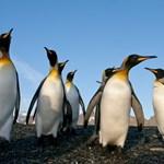 Annyira hideg van Kanadában, hogy már a pingvineket sem engedik ki a szabadba