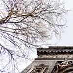 Ligetvédők: mi mentettük meg a Városliget híres öreg fáját