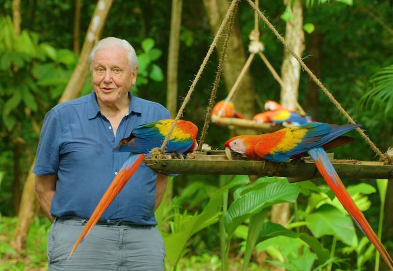 David Attenborough 95 éves korára színesebbnek látja a világot, mint bárki más