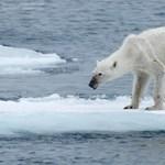 Kiszabadultak a kutatók az éhes jegesmedvék fogságából