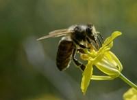 Ilyen egyszerű: ön is tehet a méhek megmentéséért, fillérekbe kerül a megoldás