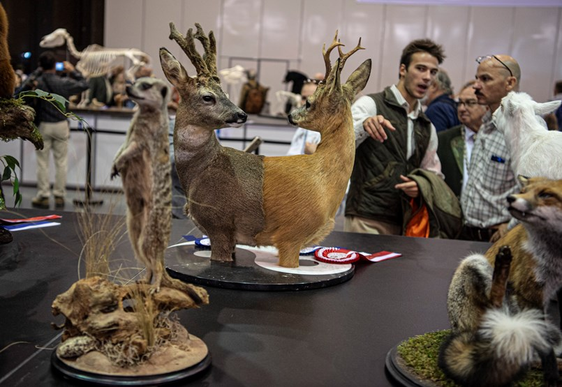 The Wonder Deer Double Prism: World Hunting Fair is an intoxicating experience