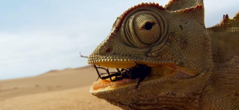 Az X-Faktort is lenyomta David Attenborough természetfilm-sorozata a fiataloknál